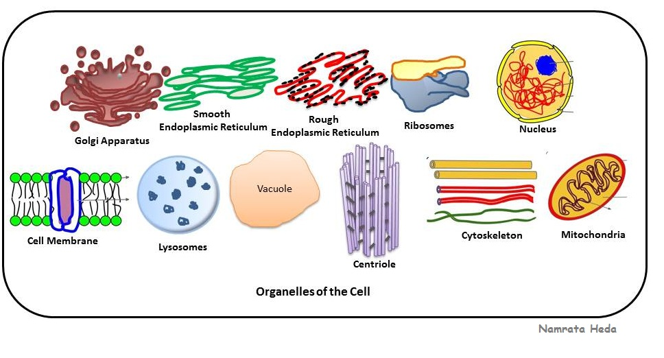 the structure and functions of proteins essay Protein structure and function broad functional classes  four levels of structure determine the shape of proteins aprimary: the linear sequence of amino acids.